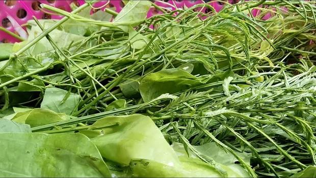 Vùng Tây Bắc có một loại rau đứng từ xa đã nghe mùi thối không chịu được, vậy mà ai cũng tranh nhau mua như 1 loại đặc sản - Ảnh 6.
