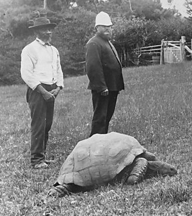 Cụ rùa khổng lồ sống qua 3 thế kỷ, chứng kiến nhiều sự kiện quan trọng của thế giới và đến giờ vẫn ung dung hưởng thái bình - Ảnh 1.