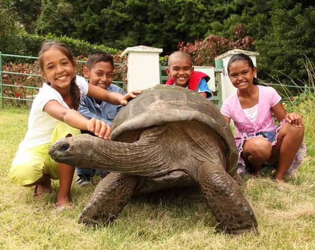 Cụ rùa khổng lồ sống qua 3 thế kỷ, chứng kiến nhiều sự kiện quan trọng của thế giới và đến giờ vẫn ung dung hưởng thái bình - Ảnh 5.