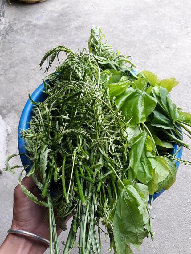 Vùng Tây Bắc có một loại rau đứng từ xa đã nghe mùi thối không chịu được, vậy mà ai cũng tranh nhau mua như 1 loại đặc sản - Ảnh 3.