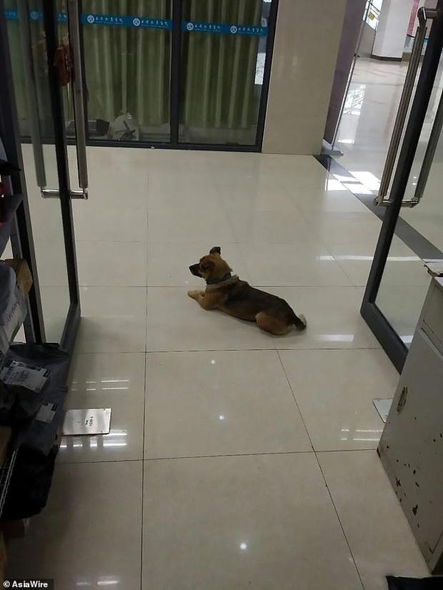 Mòn mỏi chờ đợi suốt 3 tháng trời ngoài cửa bệnh viện, chú chó trung thành không hay biết chủ đã qua đời vì dịch Covid-19 - Ảnh 2.