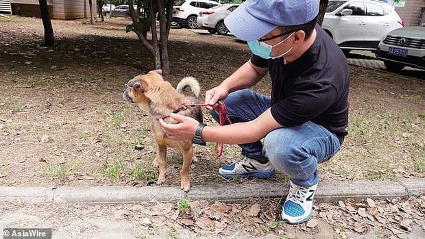 Mòn mỏi chờ đợi suốt 3 tháng trời ngoài cửa bệnh viện, chú chó trung thành không hay biết chủ đã qua đời vì dịch Covid-19 - Ảnh 4.