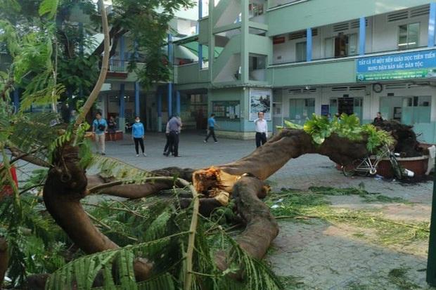 Chùm ảnh: Hiện trường cây phượng bật gốc đè trúng 13 học sinh khiến 1 em tử vong thương tâm - Ảnh 1.