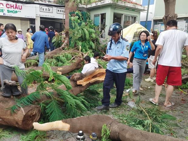 Thi thể học sinh lớp 6 tử nạn do cây phượng đổ trúng ở TP.HCM được người thân đưa về nhà - Ảnh 3.