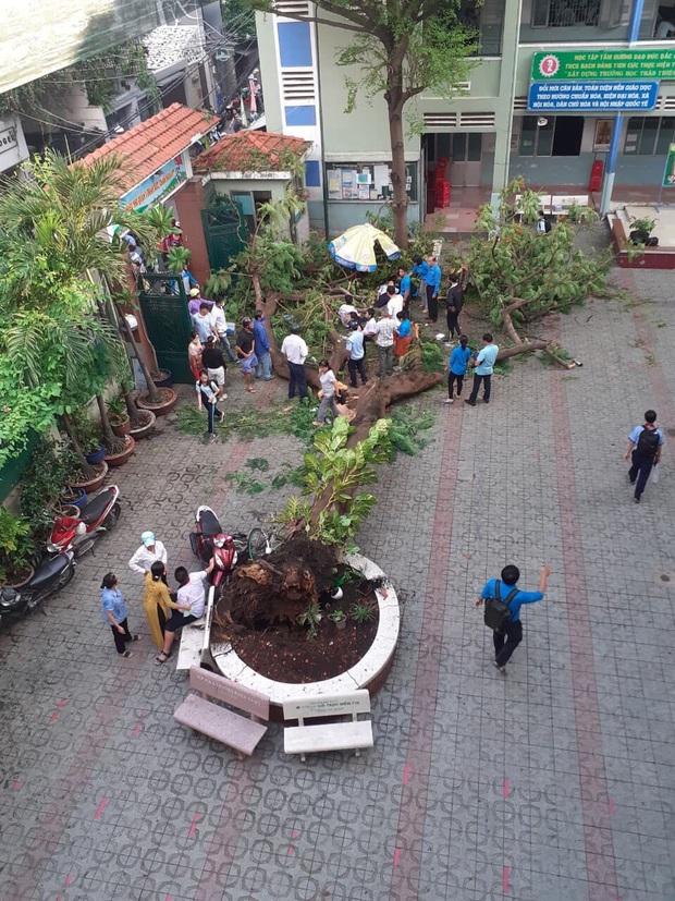 Chùm ảnh: Hiện trường cây phượng bật gốc đè trúng 13 học sinh khiến 1 em tử vong thương tâm - Ảnh 5.