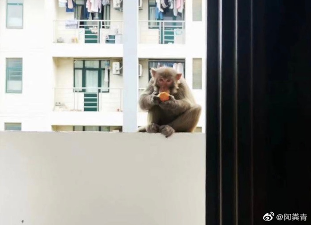 Lũ khỉ thong thả xâm chiếm trường học và lời cảnh báo dở khóc dở cười: Đừng cho chúng ăn để tránh bị tấn công, các em đánh không lại đâu! - Ảnh 1.