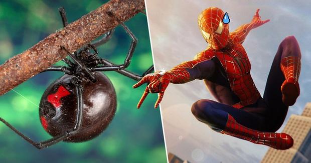 3 anh em tự cho con nhện độc nhất thế giới cắn nhằm biến thành Spider-man - Ảnh 2.