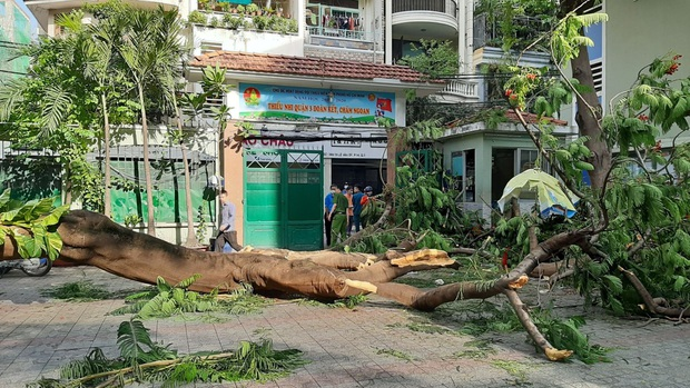 Trách nhiệm thuộc về ai trong vụ tai nạn cây đổ tại trường THCS Bạch Đằng? - Ảnh 1.
