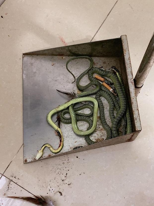 Gọi thợ đến sửa điều hòa hỏng, gia chủ ở Long An kinh hãi khi thấy búi rắn làm tổ bên trong - Ảnh 4.