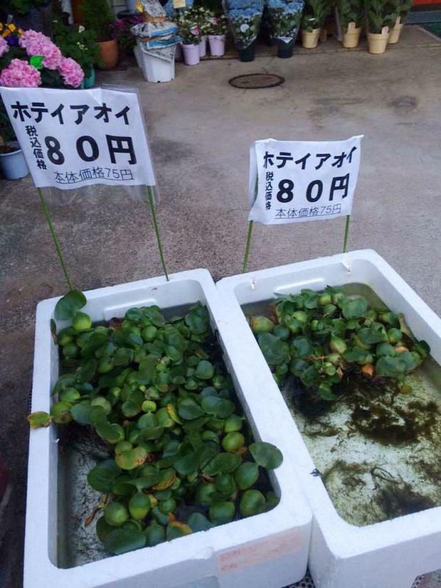 """Những loại cây quả mọc dại ở Việt Nam """"bán không ai mua"""" nhưng sang nước ngoài lại có giá cực đắt, còn được săn lùng đến """"cháy hàng"""" - Ảnh 10."""