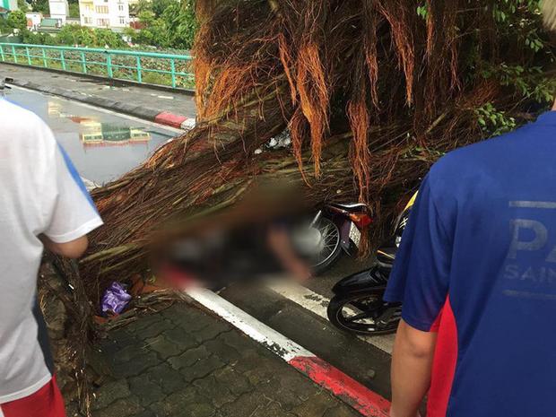 Liên tục cây xanh ngã đổ gây thương vong, chuyên gia nói nên khai tử những gốc cây tử thần - Ảnh 3.
