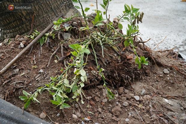 Liên tục cây xanh ngã đổ gây thương vong, chuyên gia nói nên khai tử những gốc cây tử thần - Ảnh 4.