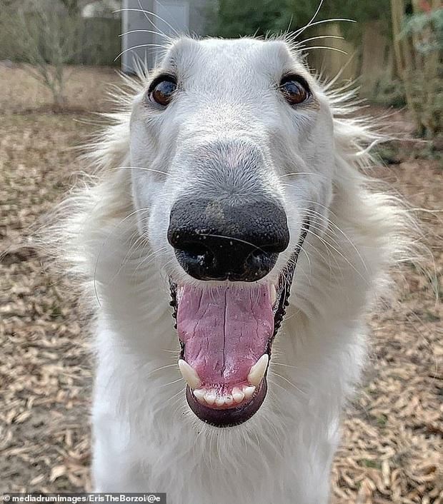 Sở hữu cái mõm dài như mỏ vịt, chú chó bỗng nổi rần rần thành hiện tượng rồi hốt về hơn 200 nghìn fan trên MXH - Ảnh 4.