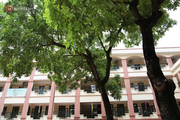 """Sau nỗi kinh hoàng """"cây đổ trong trường học"""": Các trường quản lý cây xanh ra sao? - Ảnh 5."""