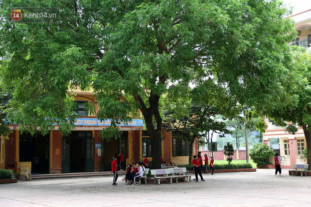 """Sau nỗi kinh hoàng """"cây đổ trong trường học"""": Các trường quản lý cây xanh ra sao? - Ảnh 3."""
