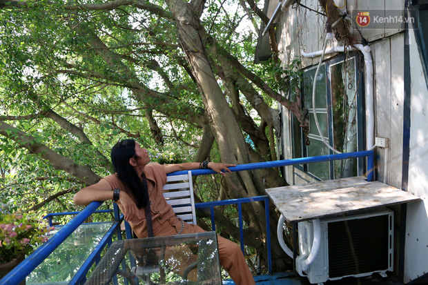 Ngay Hà Nội có một căn nhà cheo leo trên đỉnh ngọn cây của người họa sĩ 61 tuổi: Gần 20 năm trồng và đợi cây lớn - Ảnh 11.