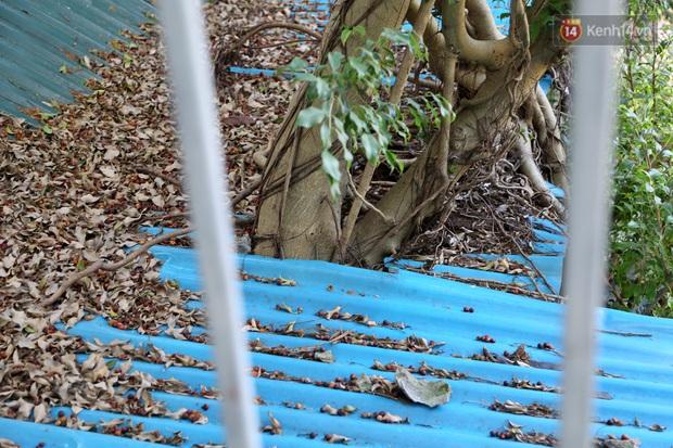 Ngay Hà Nội có một căn nhà cheo leo trên đỉnh ngọn cây của người họa sĩ 61 tuổi: Gần 20 năm trồng và đợi cây lớn - Ảnh 15.