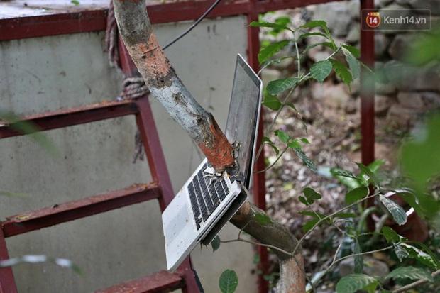 Ngay Hà Nội có một căn nhà cheo leo trên đỉnh ngọn cây của người họa sĩ 61 tuổi: Gần 20 năm trồng và đợi cây lớn - Ảnh 16.