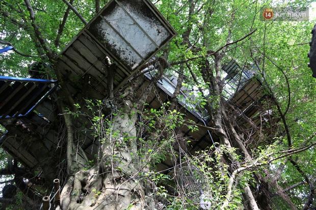 Ngay Hà Nội có một căn nhà cheo leo trên đỉnh ngọn cây của người họa sĩ 61 tuổi: Gần 20 năm trồng và đợi cây lớn - Ảnh 1.