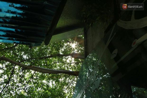 Ngay Hà Nội có một căn nhà cheo leo trên đỉnh ngọn cây của người họa sĩ 61 tuổi: Gần 20 năm trồng và đợi cây lớn - Ảnh 12.