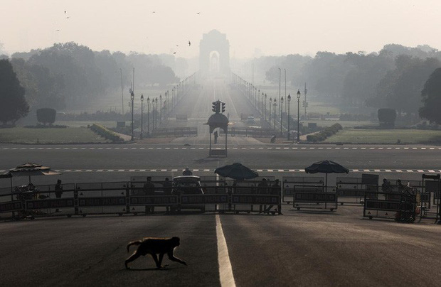 Ấn Độ: Bầy khỉ hung hãn đánh cắp mẫu máu Covid-19  - Ảnh 1.