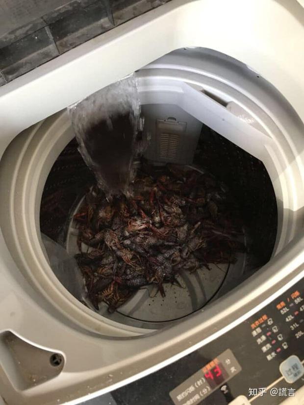 Rửa tôm bằng máy giặt theo clip mẹo vặt trên mạng, hai vợ chồng ngẩn tò te vì cái kết đau điếng lòng - Ảnh 2.