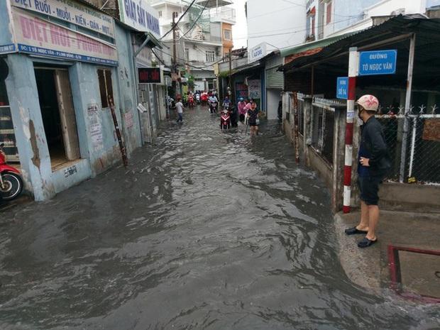 Cây đổ, đường phố Sài Gòn mênh mông nước sau trận mưa cực lớn - Ảnh 3.