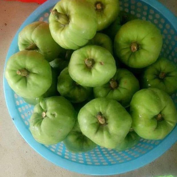 """Tưởng là ổi nhưng hoá ra loại trái cây này đã khiến biết bao người nhầm lẫn, còn được xem là """"cụ tổ"""" của các loại quả chua - Ảnh 4."""