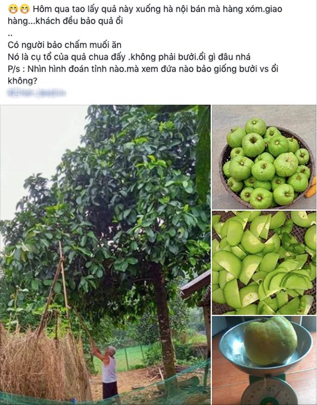 """Tưởng là ổi nhưng hoá ra loại trái cây này đã khiến biết bao người nhầm lẫn, còn được xem là """"cụ tổ"""" của các loại quả chua - Ảnh 1."""