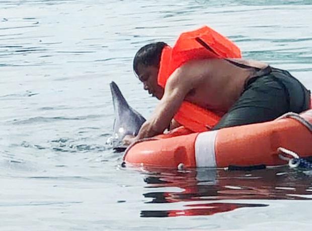 Đà Nẵng cứu hộ thành công chú cá heo dạt vào bờ biển Đà Nẵng - Ảnh 1.