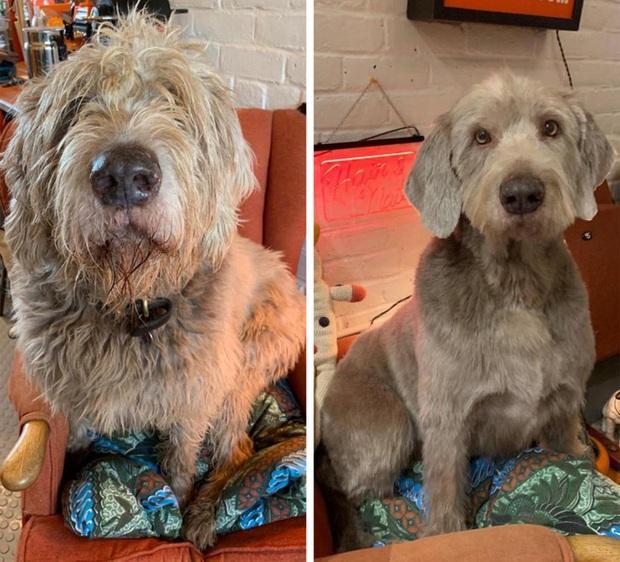 Loạt ảnh minh chứng sự khác biệt sau khi cắt tóc cho cún cưng: cứ như kiểu vừa nuôi thêm một em chó mới toanh vậy! - Ảnh 10.