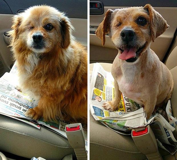Loạt ảnh minh chứng sự khác biệt sau khi cắt tóc cho cún cưng: cứ như kiểu vừa nuôi thêm một em chó mới toanh vậy! - Ảnh 11.