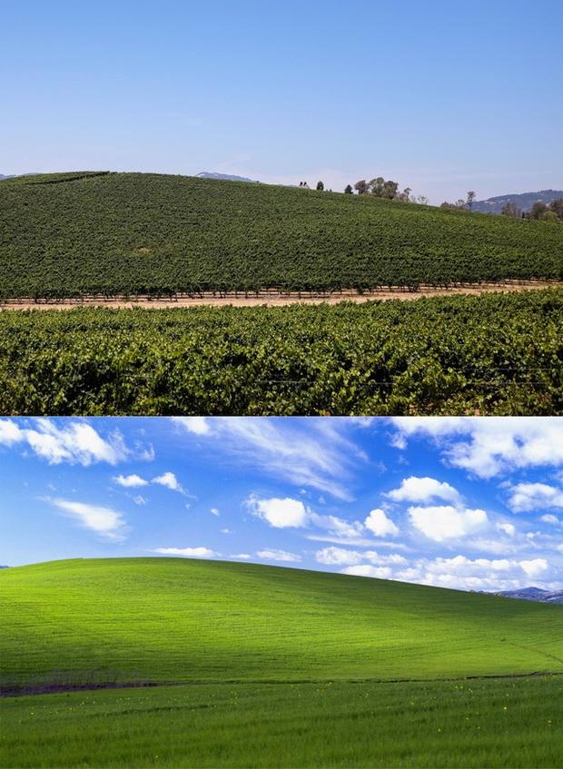 Hình nền huyền thoại Windows XP một thời: 20 năm trước được trả hơn 100.000 USD, nay vẫn xanh tốt như ngày nào - Ảnh 2.