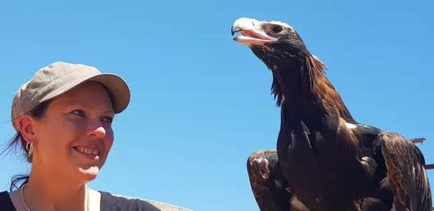 Khoảnh khắc chim ác là bé nhỏ ngang nhiên cưỡi đại bàng cực ấn tượng được ghi lại qua ống kính của nhiếp ảnh gia nghiệp dư - Ảnh 3.