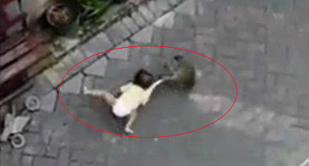 Clip: Khoảnh khắc gây sốc khi con khỉ đạp xe đến lôi bé gái đi và sự thật phía sau gây phẫn nộ  - Ảnh 2.