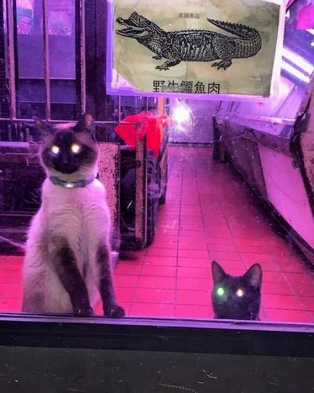 Tuyển tập những chú mèo chăm chỉ ngồi trông hàng và sở hữu phong thái như thể chính chúng nó mới là ông chủ - Ảnh 4.