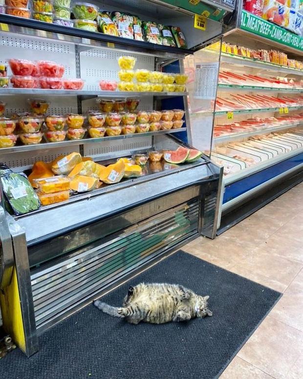 Tuyển tập những chú mèo chăm chỉ ngồi trông hàng và sở hữu phong thái như thể chính chúng nó mới là ông chủ - Ảnh 6.
