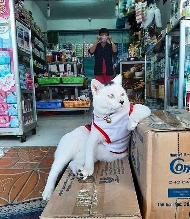 Tuyển tập những chú mèo chăm chỉ ngồi trông hàng và sở hữu phong thái như thể chính chúng nó mới là ông chủ - Ảnh 10.