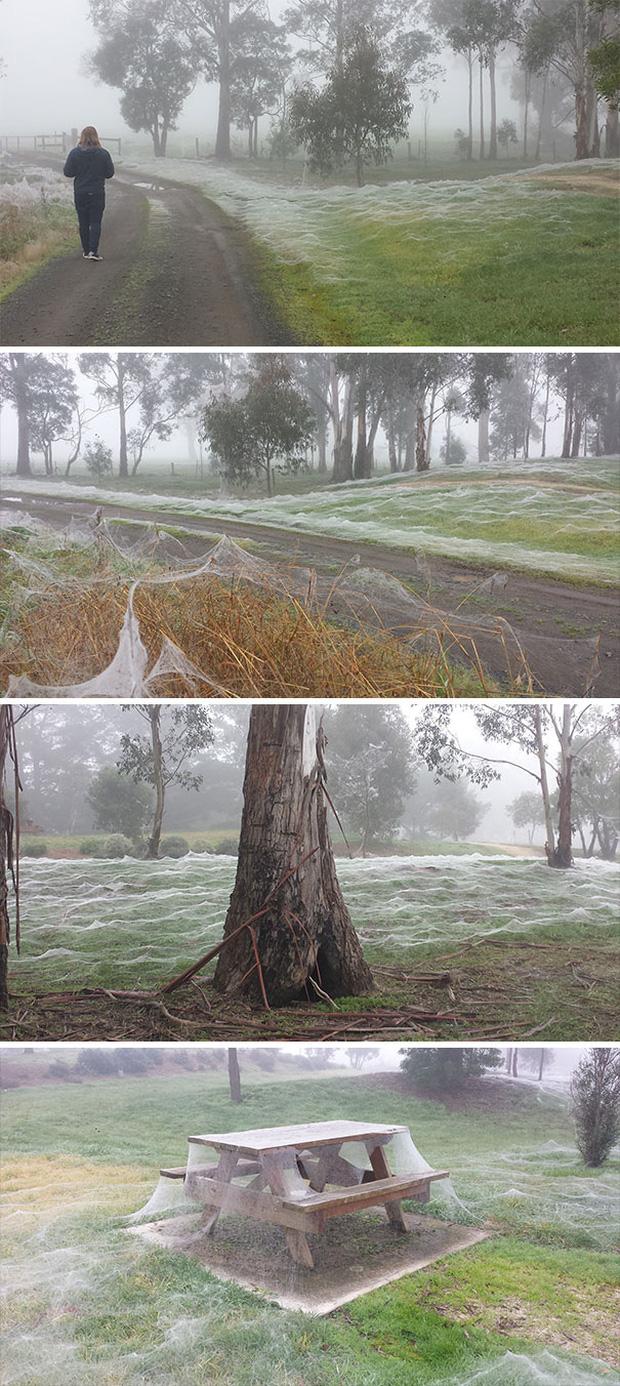 """Những bức ảnh kinh dị có thật 100% cho thấy thiên nhiên ở Australia thật đáng sợ, người có """"thần kinh thép"""" cũng phải rùng mình Photo-1-1588691877908867721260"""
