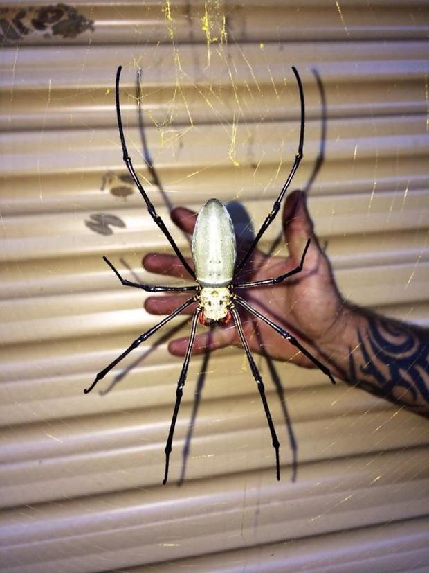 """Những bức ảnh kinh dị có thật 100% cho thấy thiên nhiên ở Australia thật đáng sợ, người có """"thần kinh thép"""" cũng phải rùng mình Photo-2-15886918779101711985593"""