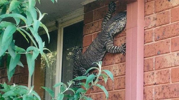 """Những bức ảnh kinh dị có thật 100% cho thấy thiên nhiên ở Australia thật đáng sợ, người có """"thần kinh thép"""" cũng phải rùng mình Photo-7-158869187791998327714"""