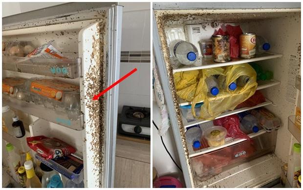 Sau 2 tháng về quê tránh dịch, sinh viên trở lại nhà trọ, bủn rủn chân tay khi phát hiện thứ gì đang lúc nhúc trên cửa tủ lạnh - Ảnh 1.