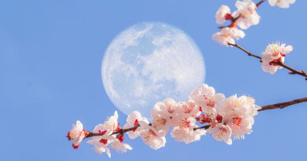 Mở cửa sổ ngay lập tức: Hoa trăng - siêu trăng cuối cùng của năm 2020 sẽ diễn ra ngay trong tối nay - Ảnh 1.