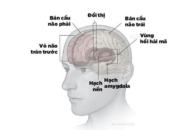 Thí nghiệm đầu tiên trong lịch sử chứng minh bộ não tự phát lại ký ức trong ngày khi bạn ngủ - Ảnh 6.