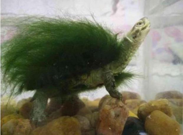Đi công tác trở về, người đàn ông ngỡ ngàng thấy chú rùa cưng đổi màu xanh lá, đưa đến bác sĩ thú y mới biết sự thật về con vật - Ảnh 1.