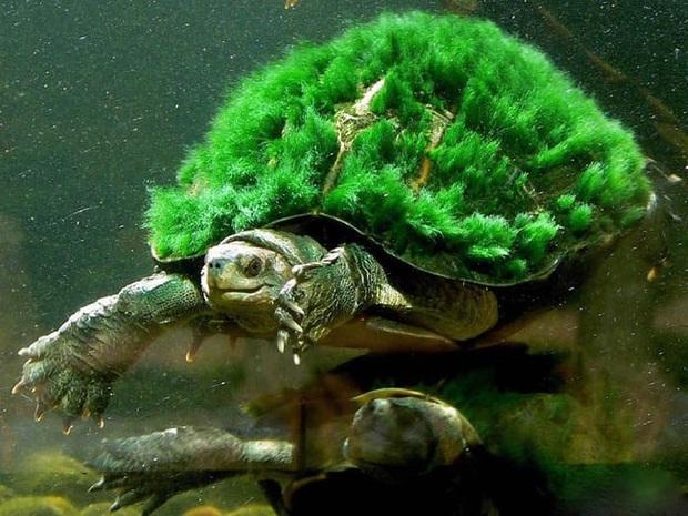 Đi công tác trở về, người đàn ông ngỡ ngàng thấy chú rùa cưng đổi màu xanh lá, đưa đến bác sĩ thú y mới biết sự thật về con vật - Ảnh 4.