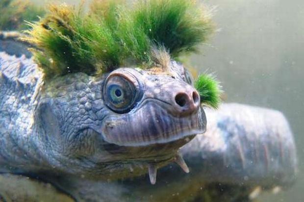Đi công tác trở về, người đàn ông ngỡ ngàng thấy chú rùa cưng đổi màu xanh lá, đưa đến bác sĩ thú y mới biết sự thật về con vật - Ảnh 5.