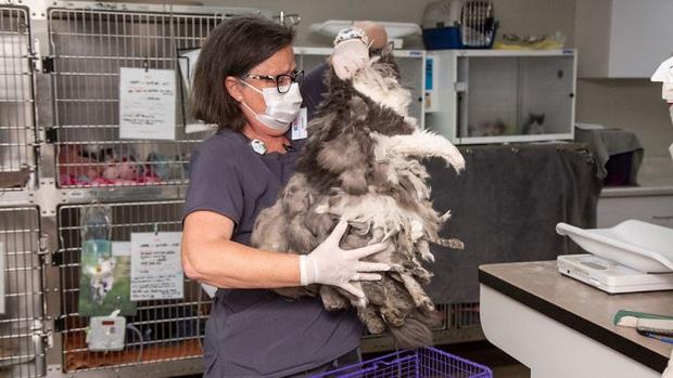 Bị bao phủ bởi 1kg lông rậm rạp, mèo hoang khiến nhiều người mới gặp phải bối rối vì không biết là con gì - Ảnh 1.