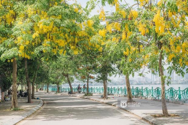 Hồ Tây rất chill những ngày này: dân tình đua nhau check-in với Muồng Hoàng Yến, chiều hoàng hôn đông kín người tụ tập - Ảnh 3.