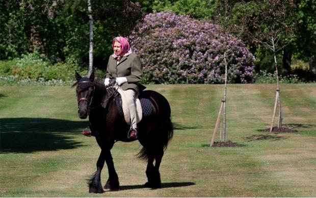 Anh nới lỏng hạn chế, Nữ hoàng có thể cưỡi ngựa đi dạo - Ảnh 1.